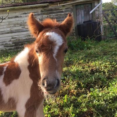 Princess Zoe Foal 2